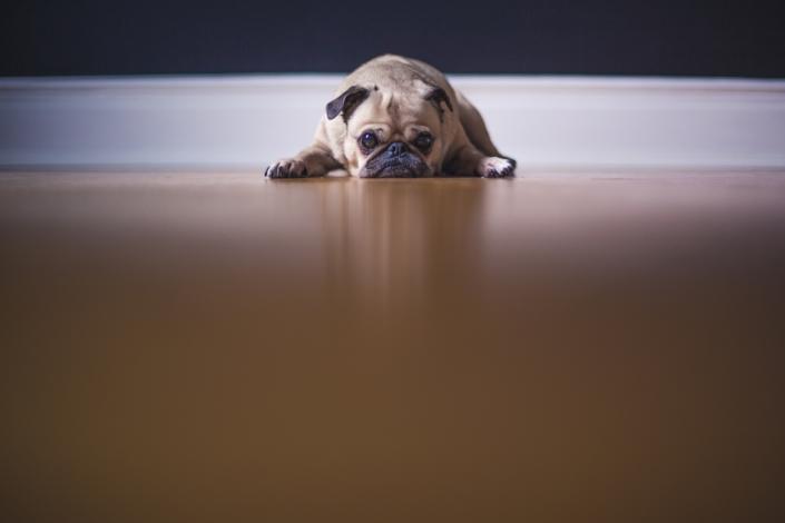 puppy die op een grote lege vloer ligt